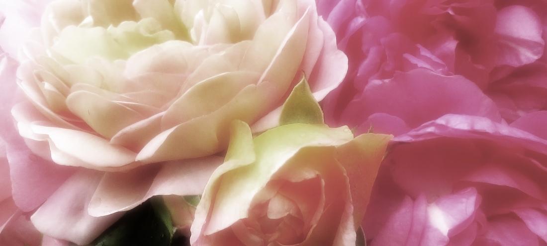 Photos perso retravaillées, textures pétales de roses