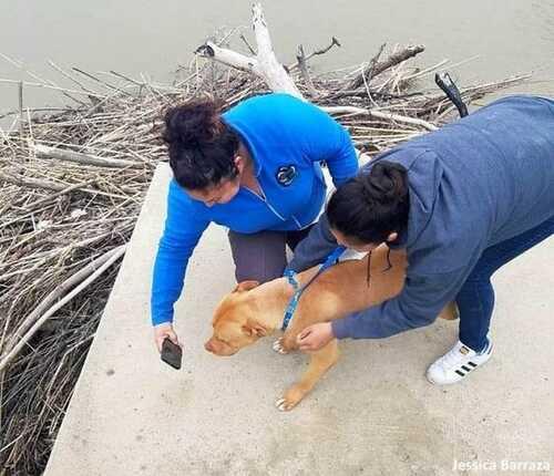 (-*♥*-)  Ce chien, coincé pendant plusieurs jours sur une pile de bois à la dérive sur une rivière, est enfin secouru.