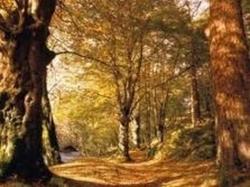 Souvenir de Damanhur - Dans le bois sacré...
