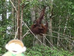 Clément à Bornéo