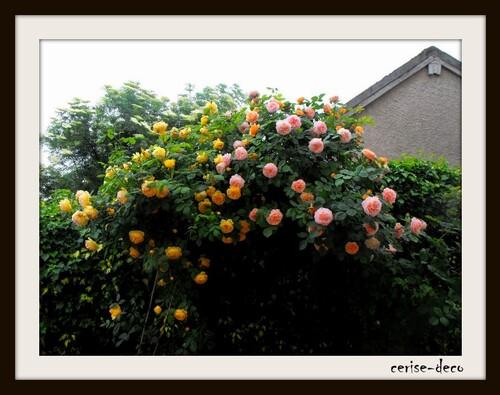 mon jardin : mon cocon
