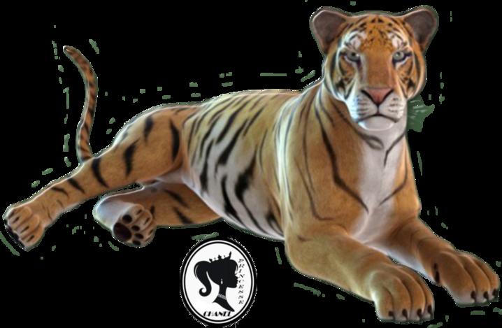Tubes : tigres 3D