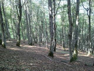 Un jour par la forêt, Marie Sizun (Arléa)
