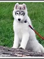 Laïcko (4,5 mois)
