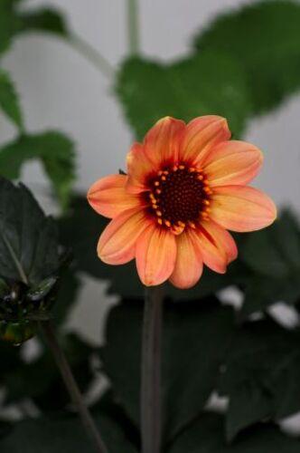 Un jour, une couleur : la vie en orange