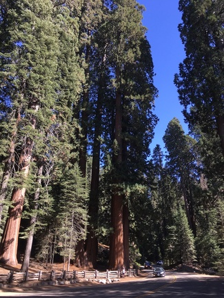Jour 13 - Sequoias and Kings Canyon National Park