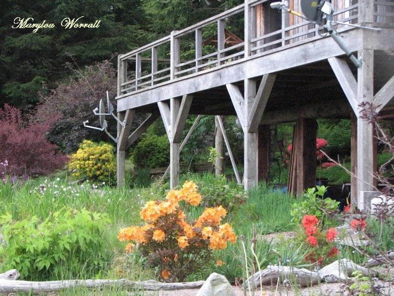 Nouvelles du Canada 93 : Autre aspect du jardin