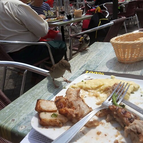 repas avec les moineaux lol