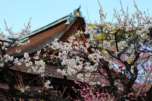 Voyage au Japon à planifier pour dans lomptemps