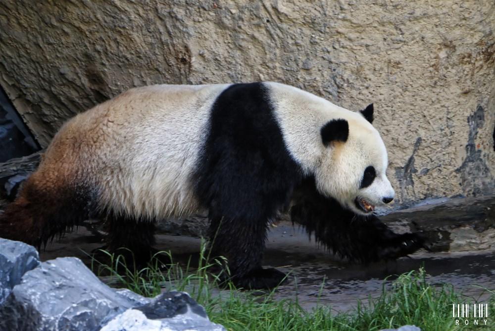 Xing Hui, première photo de l'année