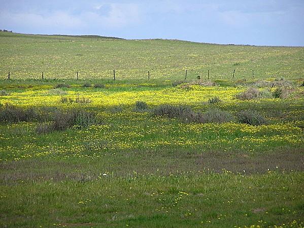 800px-Tienie Versfeld Wildflower Reserve-P9210033