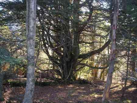 arbrelioran1.jpg