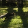hyde park - squirrel 11.JPG