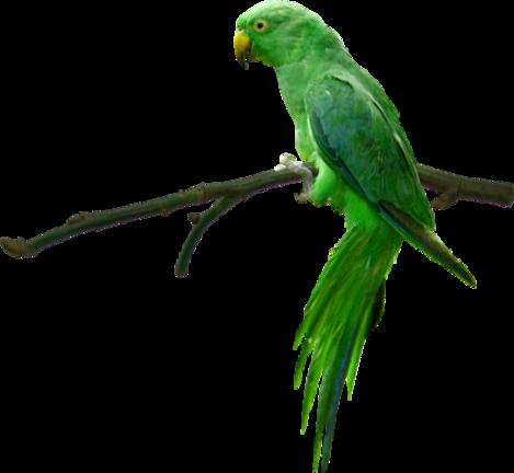 Oiseaux ( exotique ) 4