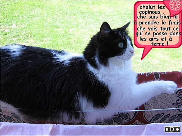 chalut-1.jpg