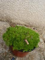 foire aux plantes à Brest