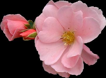Pequenas flores=Petits fleurs