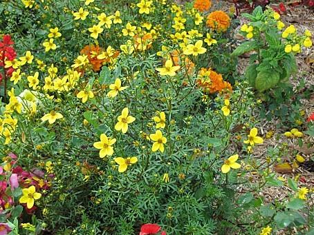fleurs-4172.JPG