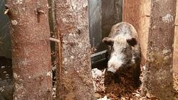 Quelques animaux caractéristiques du Jura