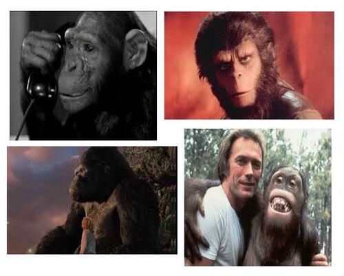 Le cinéma et les singes