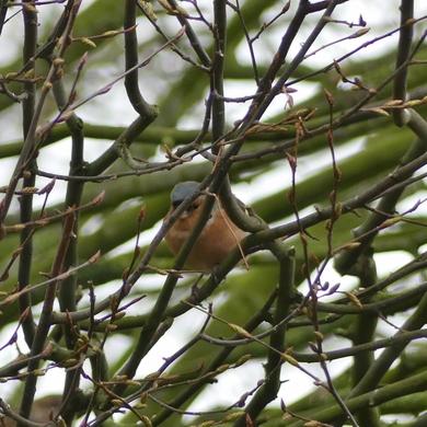 Les 25 et 26 janvier : Comptage national des oiseaux de jardin...