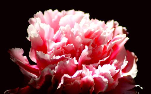 images fleurs
