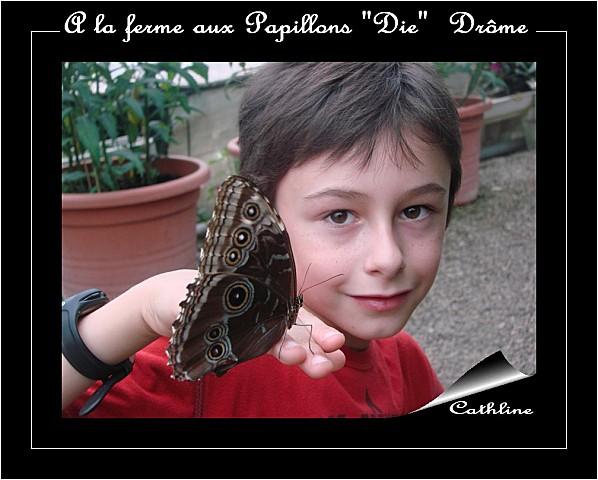 dany--papillon.jpg