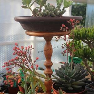 Recyclage d'un pied de table vissé sur une étagère pour mettre vos plants en hauteur