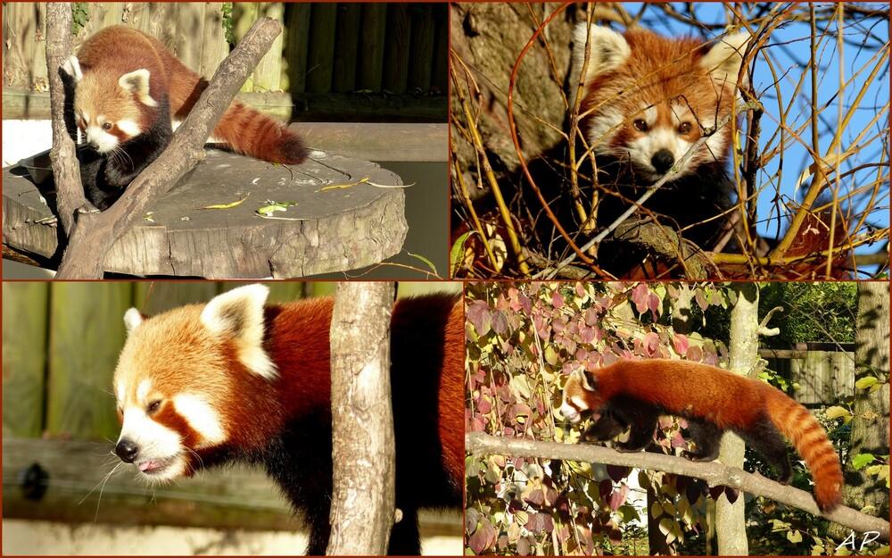 Le zoo avant sa fermeture annuelle