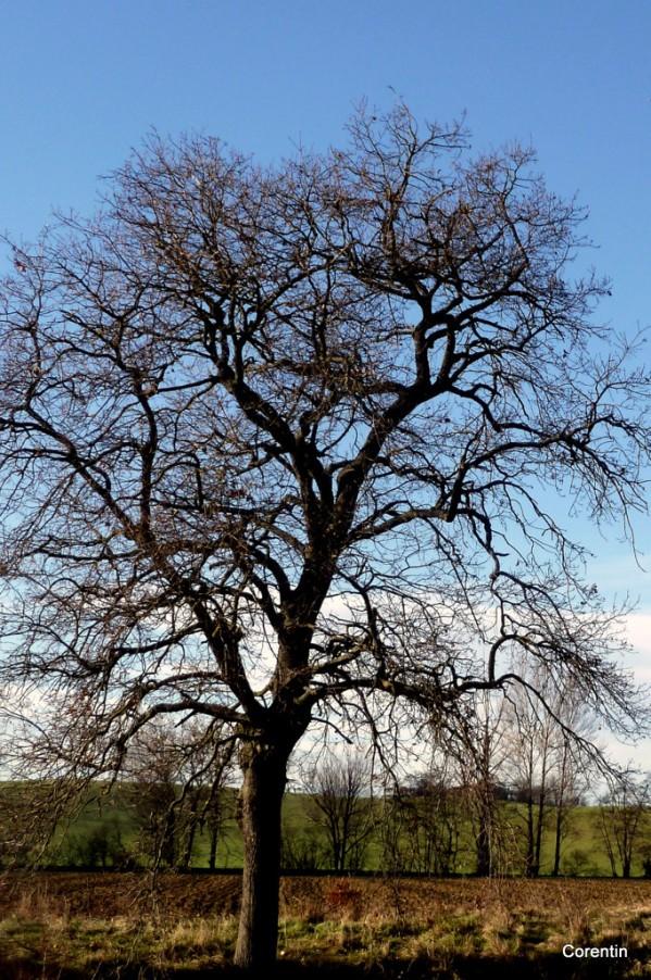 ez01---L-arbre.JPG
