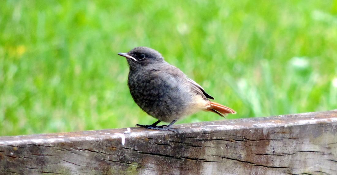des oiseaux sur une aire de CCar