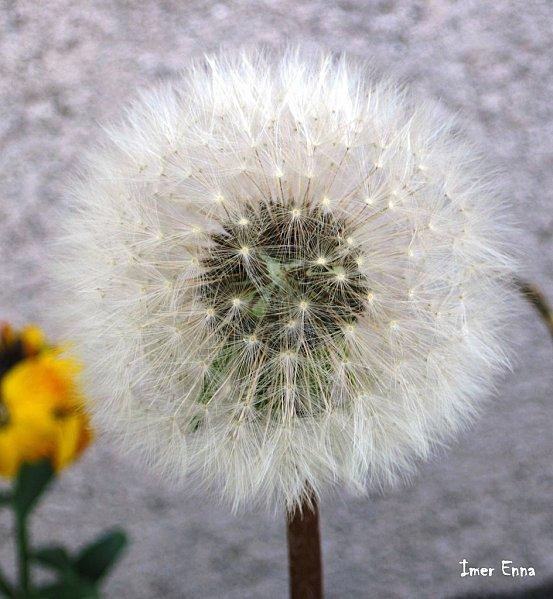 Fleurs-3255.JPG