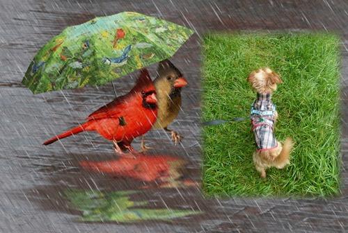 Balade sous la pluie...