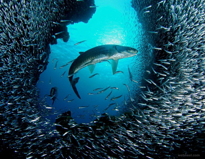 underwater photography tarpon grand