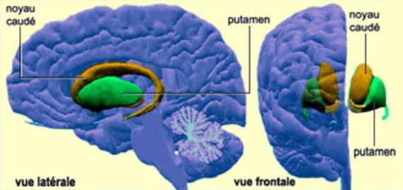 http://lancien.cowblog.fr/images/Cerveau1/gangbase1.jpg