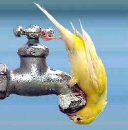 Juste un peu d'eau
