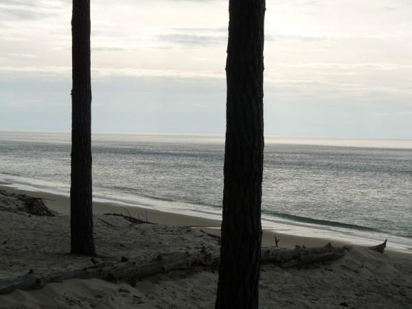 Le Teich & le petit Nice 24mars 2011 027