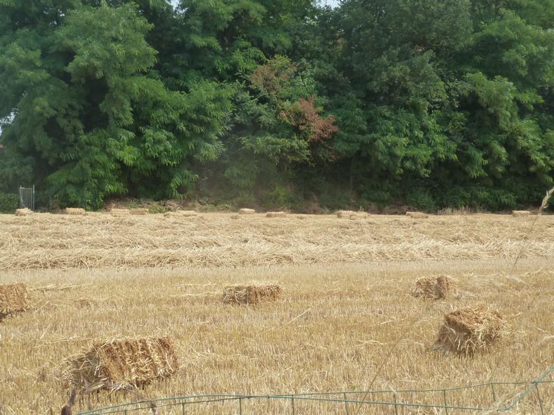 Les blés ...