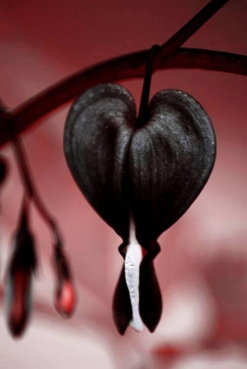 """""""L'amour est de silences, tout autant que de paroles """""""