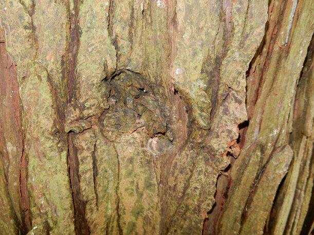 Balade dans la forêt de Soignes