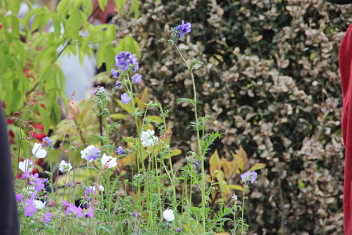 20èmes Journées des plantes au lac d'Aiguebelette