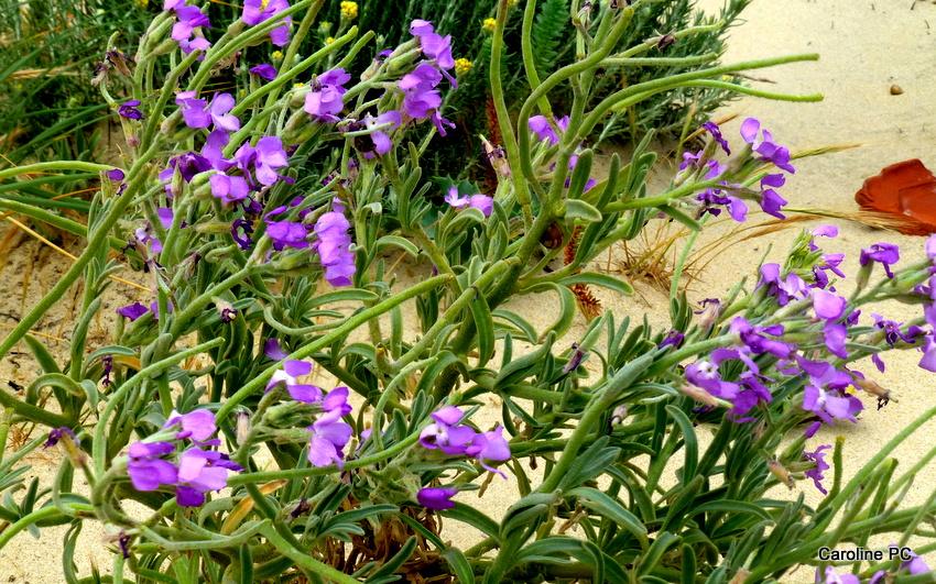 Bonne fête des mères, les fleurs sur les dunes