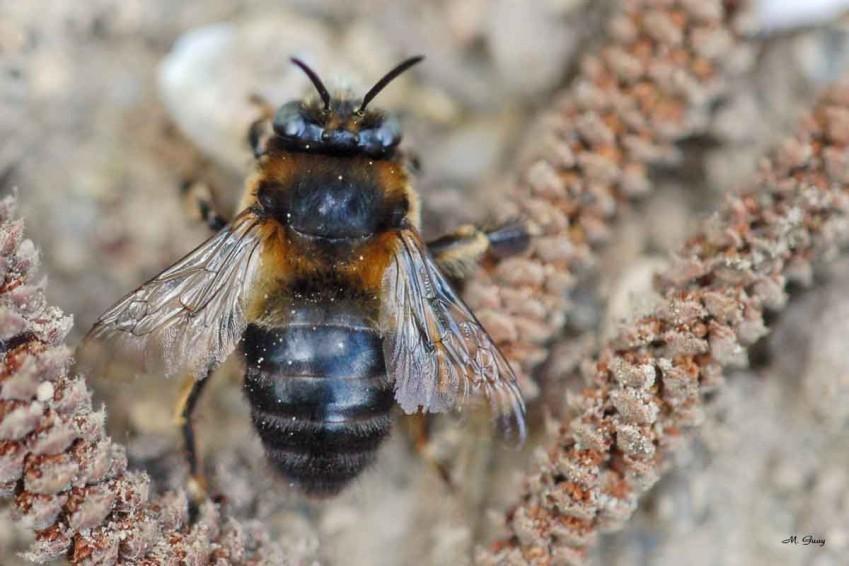mouche-ou-abeille-8263.jpg