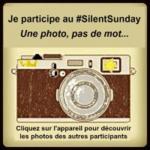 SilentSunday#8