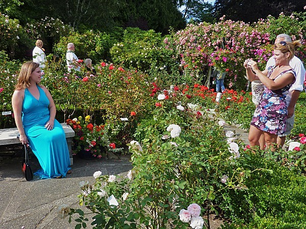 Jour 24 Butchart Gardens rose bleue