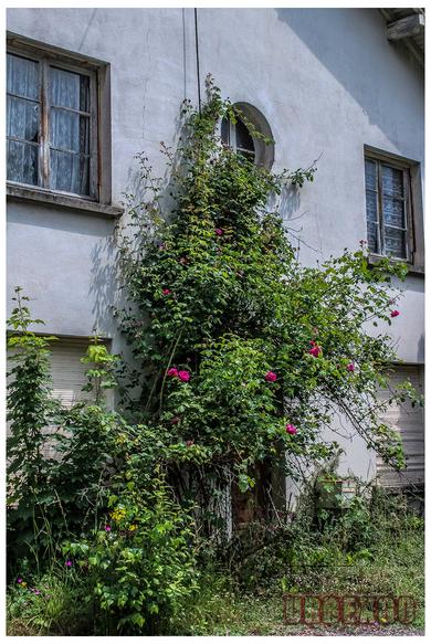 La villa du fleuriste