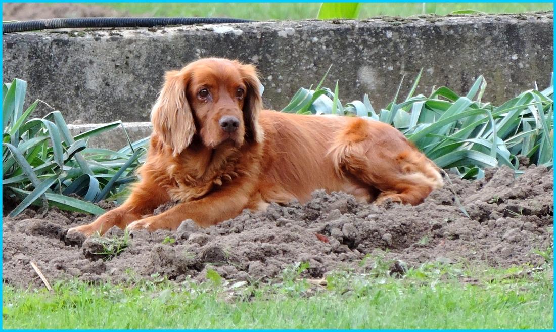 un chien qui aime son jardin !