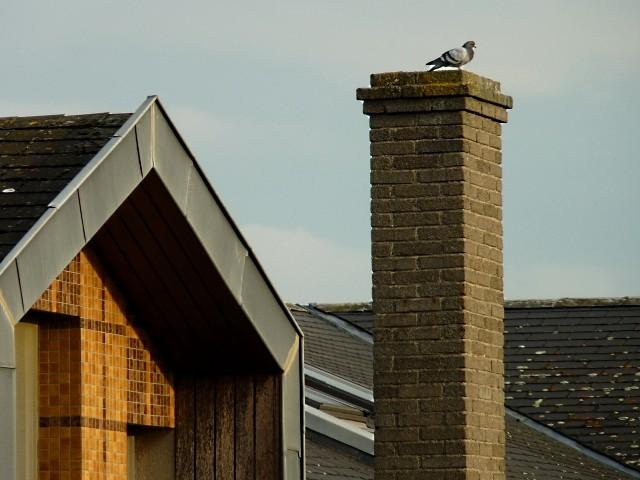 Pigeon-caméra Metz - Marc de Metz 2011