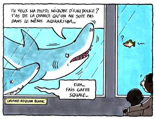 Squale, le requin blanc