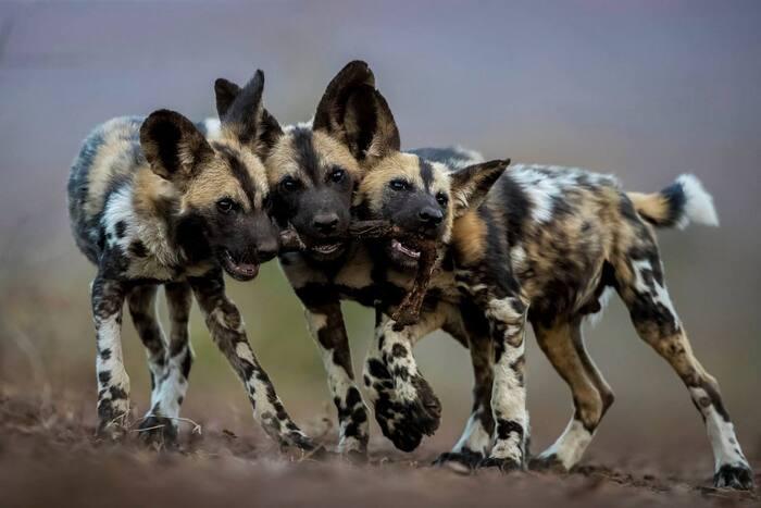 Meilleures photos de la faune au LUMIX People's Choice Award 2018-19
